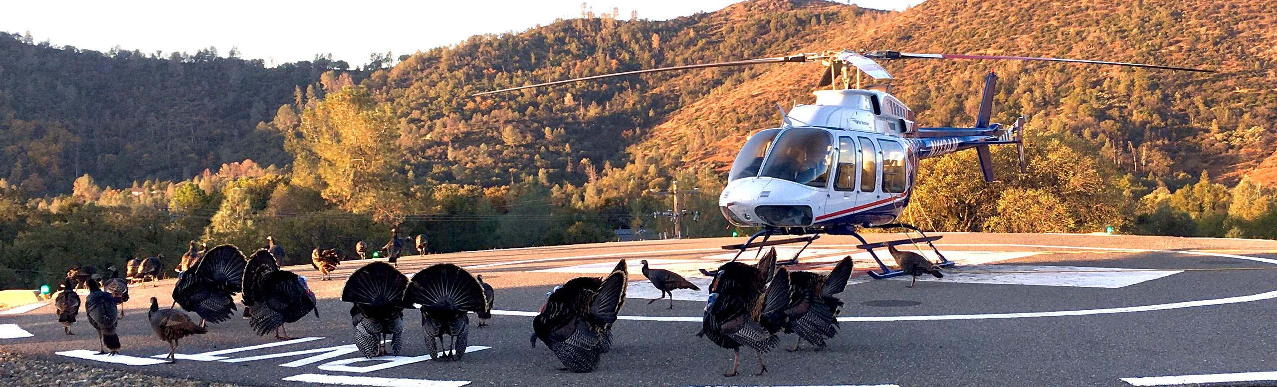 JCFHD Helicopter surrounded by Turkeys